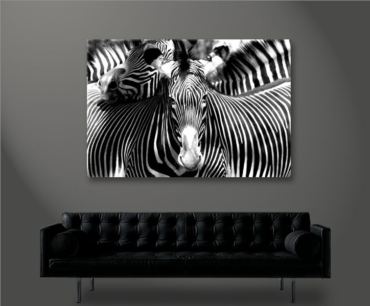 zebra zebras 1p bild bilder tierbilder auf leinwand wandbild poster ebay. Black Bedroom Furniture Sets. Home Design Ideas
