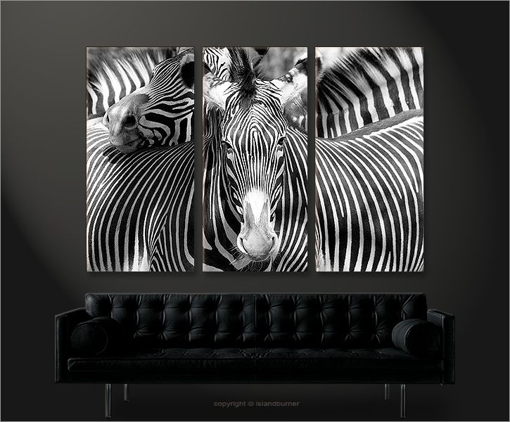 zebra tiere natur afrika bild 3 bilder zebras zoo auf leinwand wandbild poster ebay. Black Bedroom Furniture Sets. Home Design Ideas
