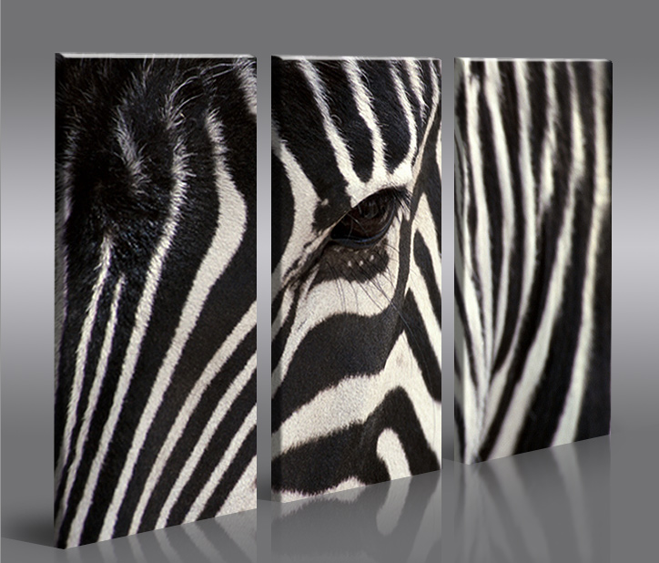 zebra v2 3p bild auf leinwand wandbild poster kunstdruck ebay. Black Bedroom Furniture Sets. Home Design Ideas